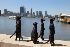 meerkats on river