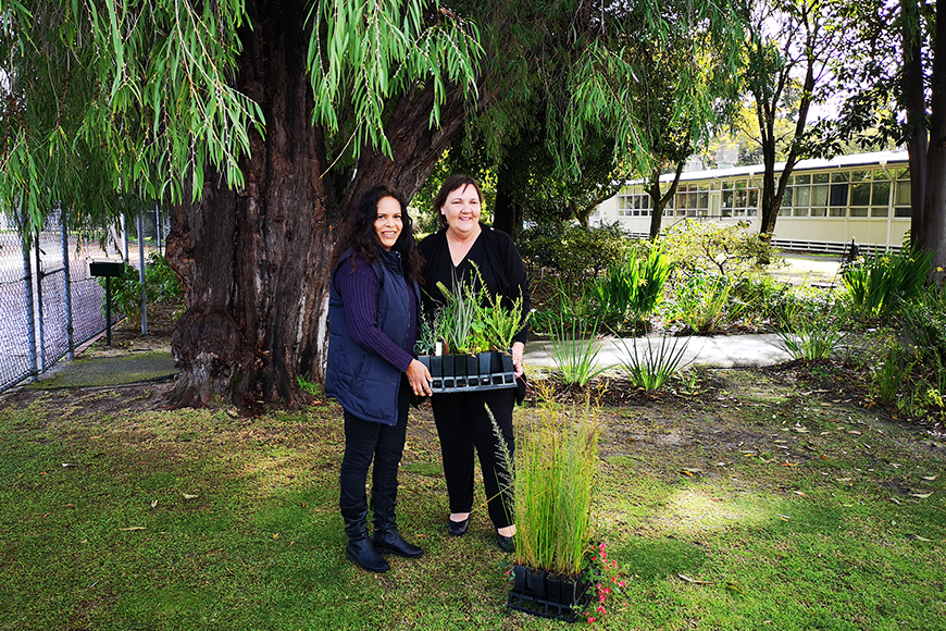 Robyn and Jasmine Curtin Primary School plants