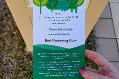 street tree postcard Urban Forest Strategy