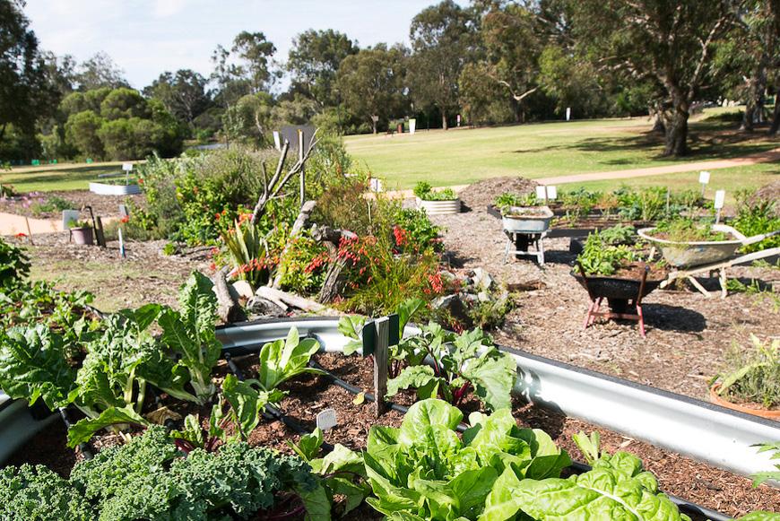 community gardening. Community Gardening G