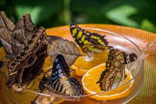 Bee-Butterfly-Feeders-Website-Image